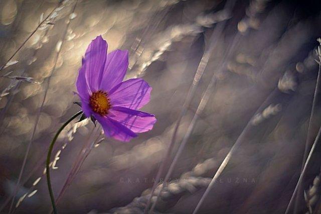 Florile ochilor mei: Picturi din sanul naturii - Poza 15