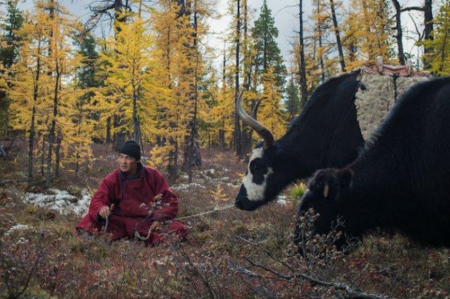 Oameni si reni, in inima Mongoliei - Poza 5