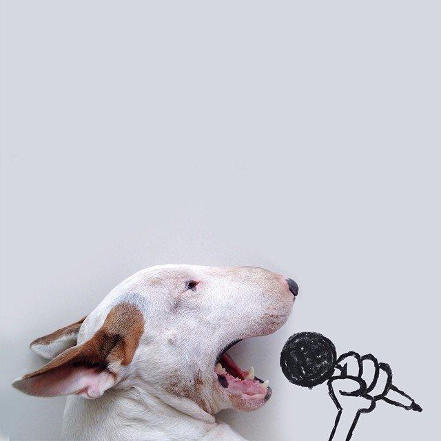 Bull Terrierul Jimmy Choo, intr-un pictorial trasnit - Poza 8