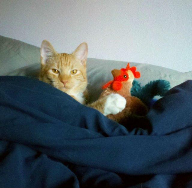 20+ Poze amuzante cu pisici naravase - Poza 10