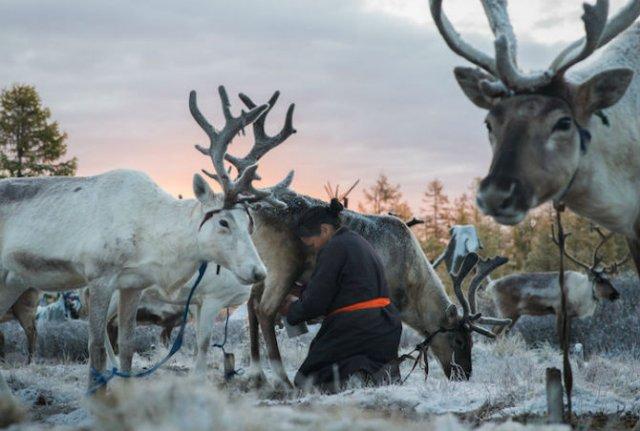 Oameni si reni, in inima Mongoliei - Poza 2