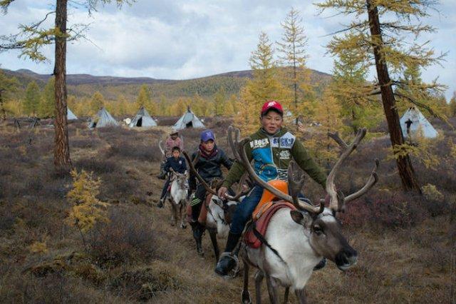 Oameni si reni, in inima Mongoliei - Poza 4