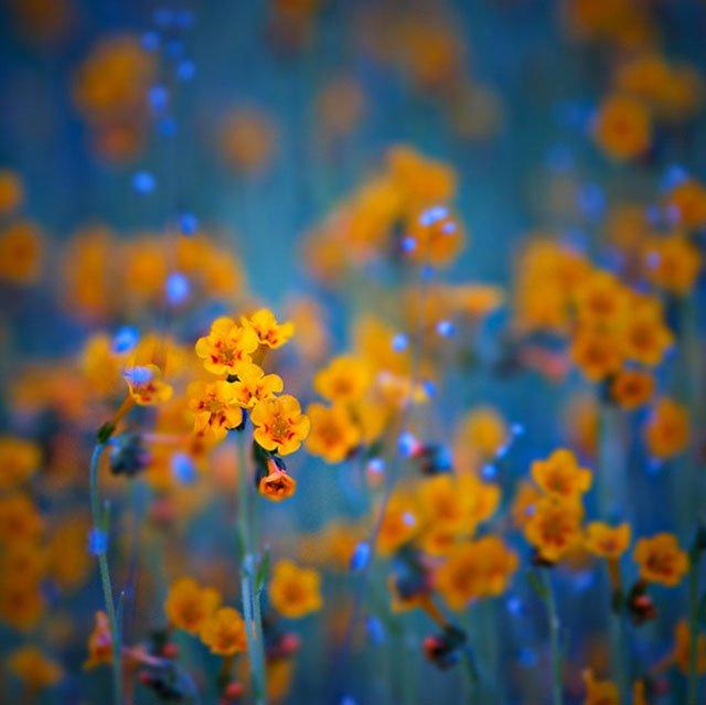 30 de poze cu flori minunate - Poza 3