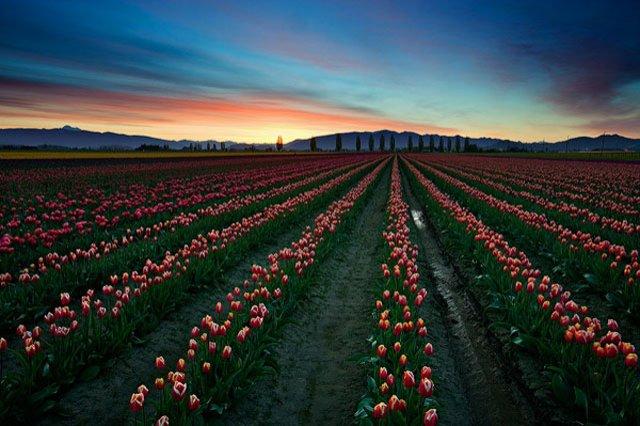 30 de poze cu flori minunate - Poza 28