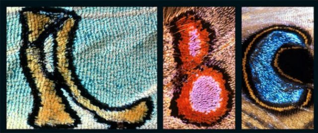 Alfabetul fluturilor - Literele care au prins aripi - Poza 1
