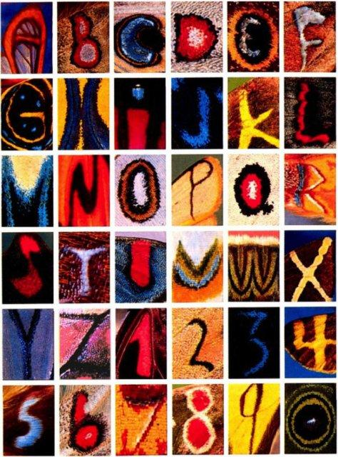 Alfabetul fluturilor - Literele care au prins aripi