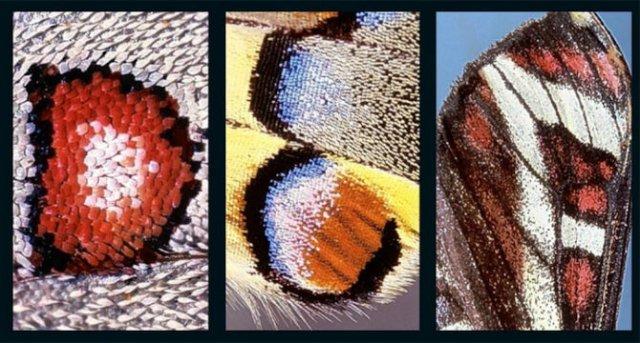 Alfabetul fluturilor - Literele care au prins aripi - Poza 2
