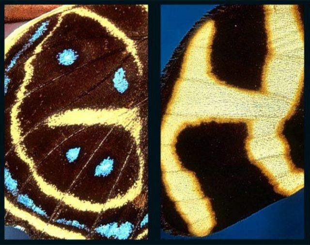 Alfabetul fluturilor - Literele care au prins aripi - Poza 3