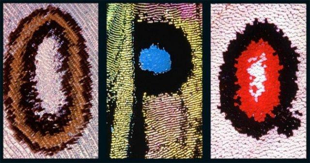 Alfabetul fluturilor - Literele care au prins aripi - Poza 6