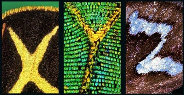 Alfabetul fluturilor - Literele care au prins aripi - Poza 9