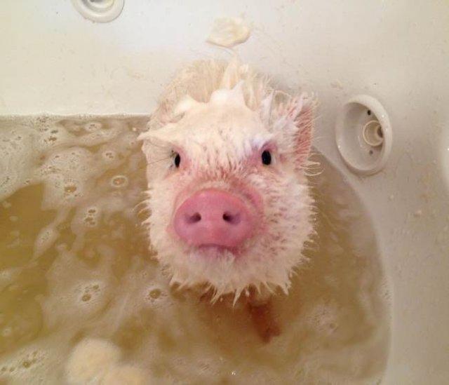 14 Poze hazlii cu animale care fac baie - Poza 1