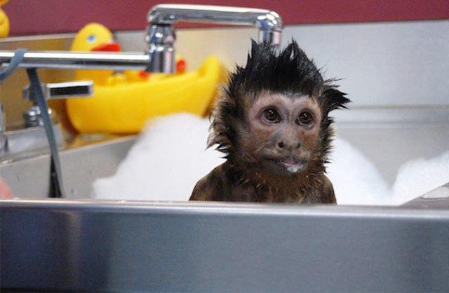 14 Poze hazlii cu animale care fac baie - Poza 14