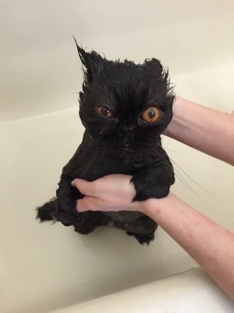 14 Poze hazlii cu animale care fac baie - Poza 2