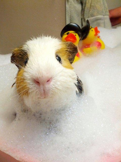 14 Poze hazlii cu animale care fac baie - Poza 3