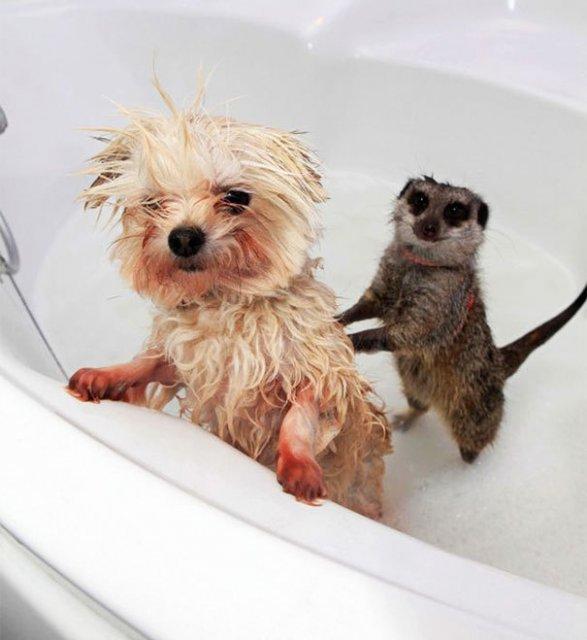 14 Poze hazlii cu animale care fac baie - Poza 4