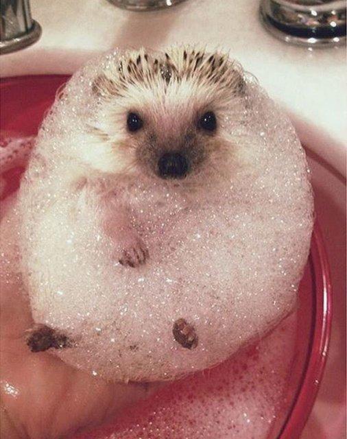 14 Poze hazlii cu animale care fac baie - Poza 5