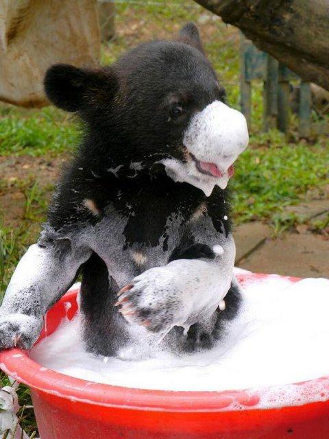 14 Poze hazlii cu animale care fac baie - Poza 7