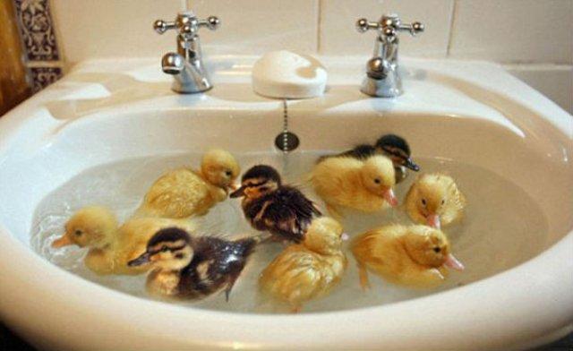 14 Poze hazlii cu animale care fac baie - Poza 8