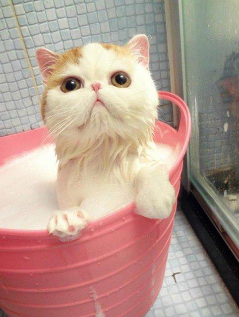 14 Poze hazlii cu animale care fac baie - Poza 9