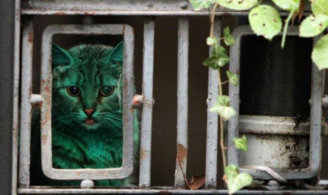 Animale surprinse in cele mai uimitoare ipostaze - Poza 1