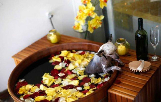 Animale surprinse in cele mai uimitoare ipostaze - Poza 12