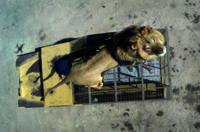 Animale surprinse in cele mai uimitoare ipostaze - Poza 5