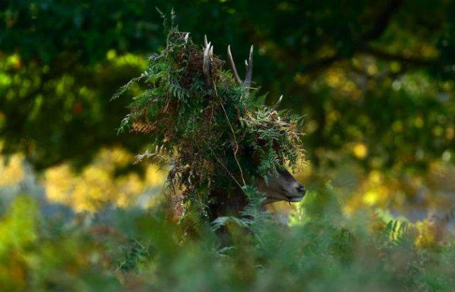 Animale surprinse in cele mai uimitoare ipostaze - Poza 8