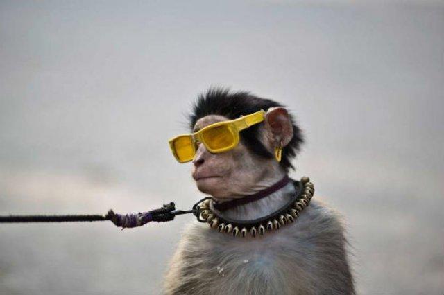 Animale surprinse in cele mai uimitoare ipostaze - Poza 9