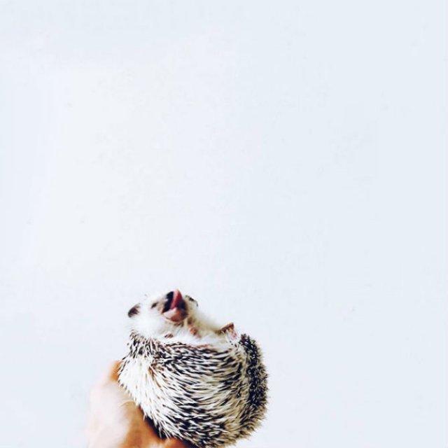 Viata simpla a unor arici haiosi, in poze nostime - Poza 16