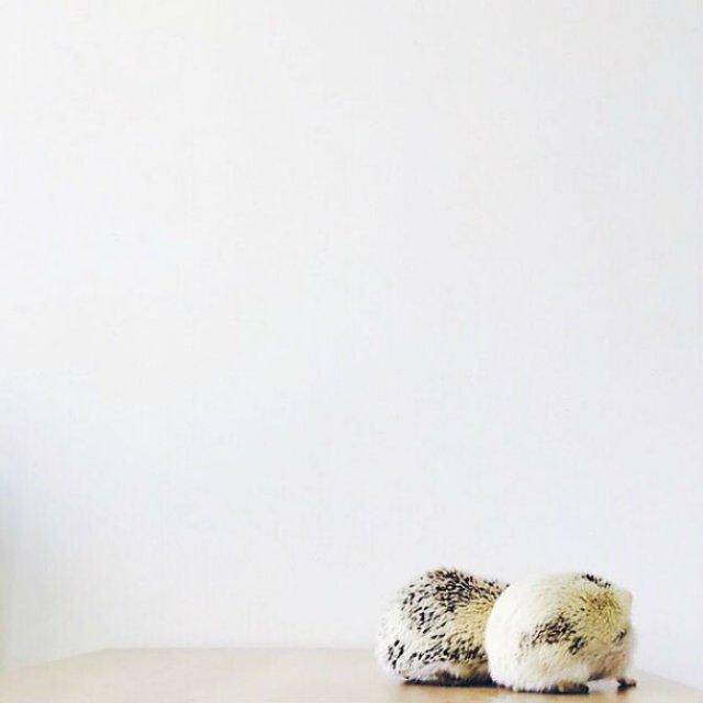 Viata simpla a unor arici haiosi, in poze nostime - Poza 17