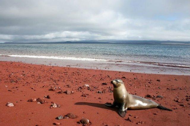 Cele mai ciudate plaje din lume, de o frumusete incredibila - Poza 14