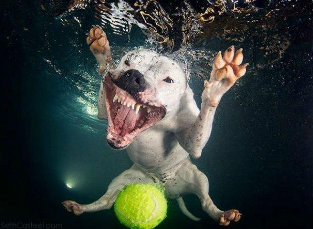 Cei mai simpatici caini fotografiati sub apa