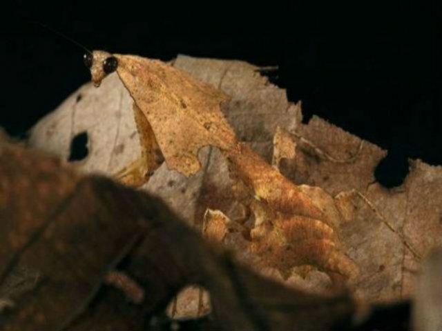 Maestrii camuflajului: 9 Vietati care pot deveni invizibile - Poza 5