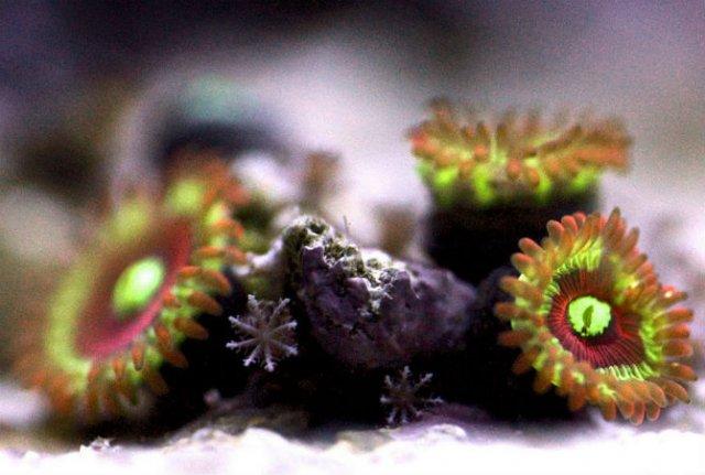 Franturi vibrante din viata subacvatica, cu Felix Salazar - Poza 10