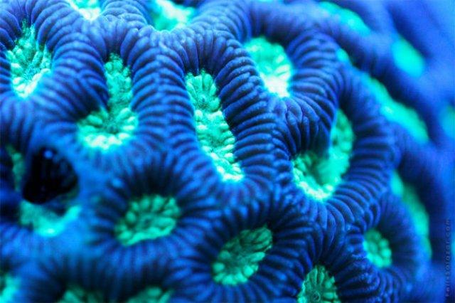 Franturi vibrante din viata subacvatica, cu Felix Salazar - Poza 11