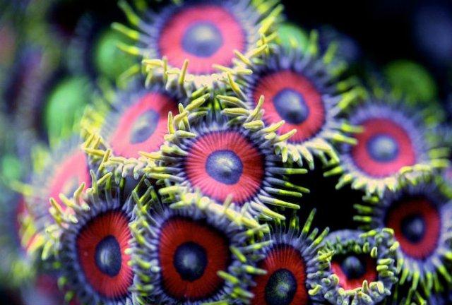 Franturi vibrante din viata subacvatica, cu Felix Salazar - Poza 2