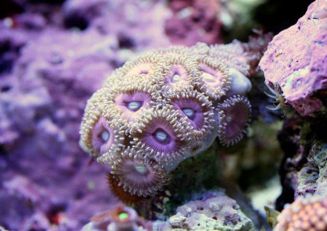 Franturi vibrante din viata subacvatica, cu Felix Salazar - Poza 3