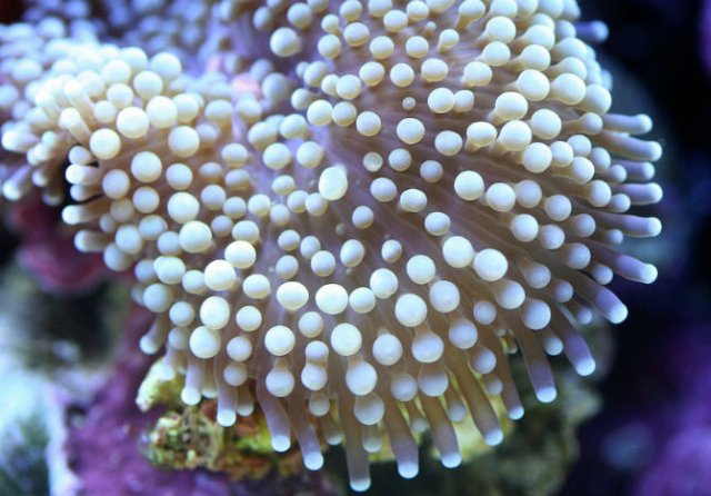Franturi vibrante din viata subacvatica, cu Felix Salazar - Poza 4