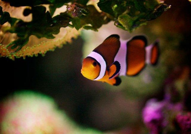 Franturi vibrante din viata subacvatica, cu Felix Salazar - Poza 5