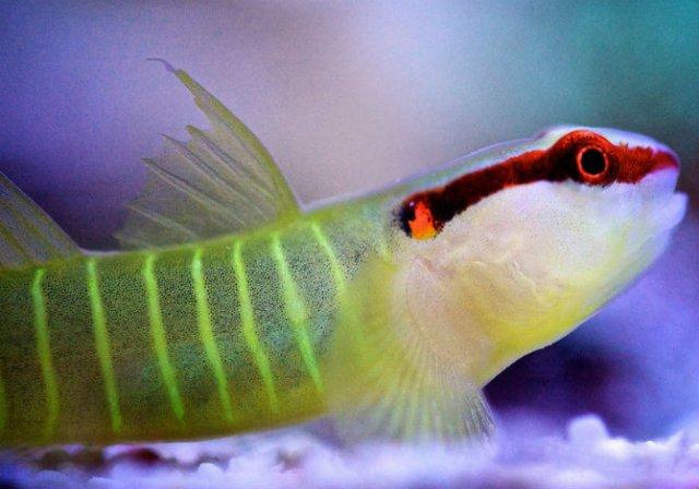 Franturi vibrante din viata subacvatica, cu Felix Salazar - Poza 7