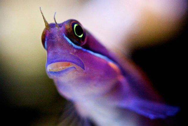 Franturi vibrante din viata subacvatica, cu Felix Salazar - Poza 8