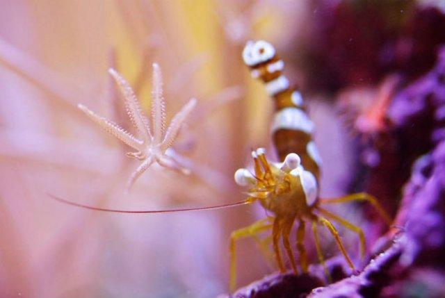 Franturi vibrante din viata subacvatica, cu Felix Salazar - Poza 9