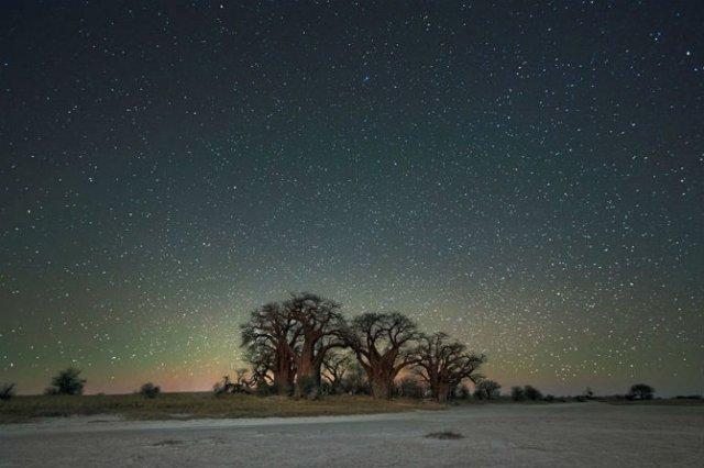 Nopti de diamant: Cei mai frumosi arbori seculari, in padurile stelare - Poza 1
