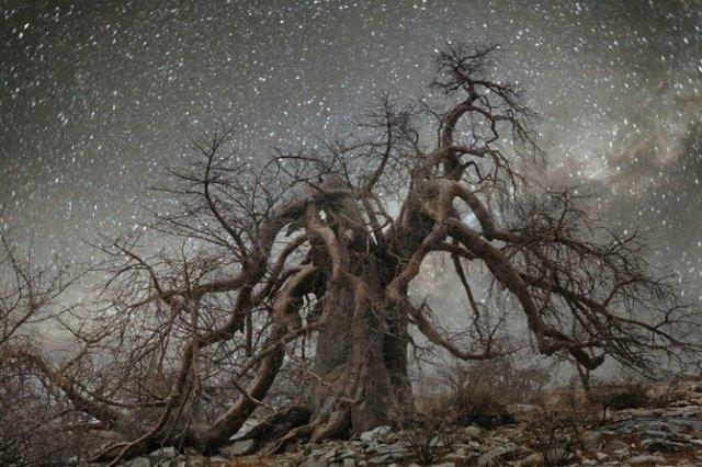 Nopti de diamant: Cei mai frumosi arborii seculari, in padurile stelare