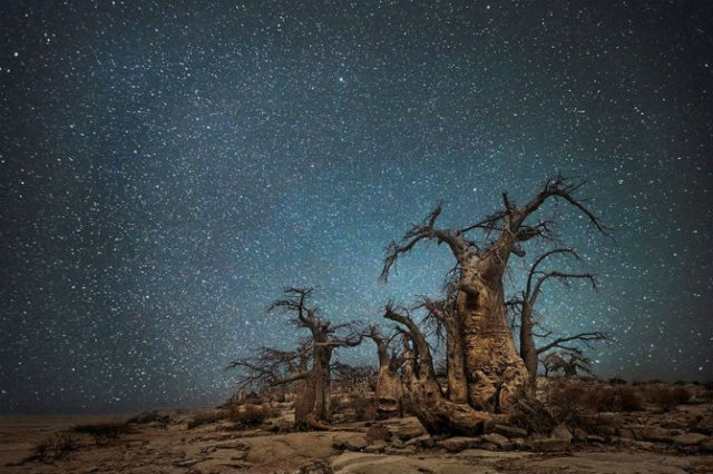 Nopti de diamant: Cei mai frumosi arbori seculari, in padurile stelare - Poza 3