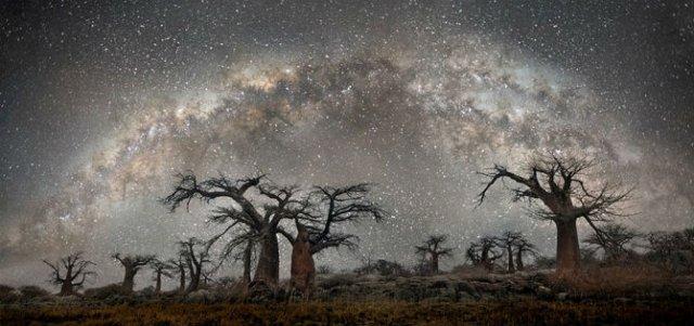 Nopti de diamant: Cei mai frumosi arbori seculari, in padurile stelare - Poza 4
