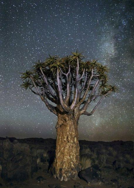 Nopti de diamant: Cei mai frumosi arbori seculari, in padurile stelare - Poza 5