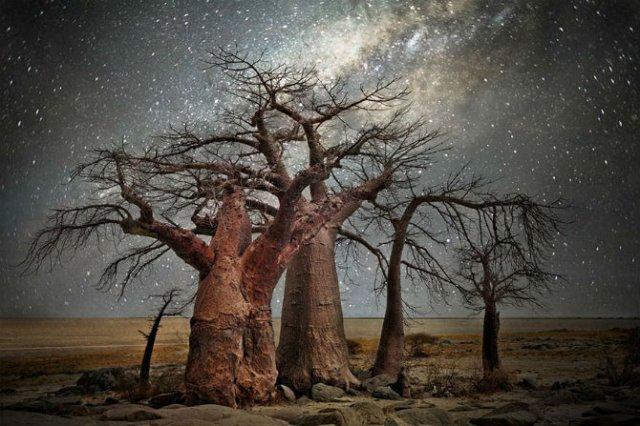 Nopti de diamant: Cei mai frumosi arbori seculari, in padurile stelare - Poza 6