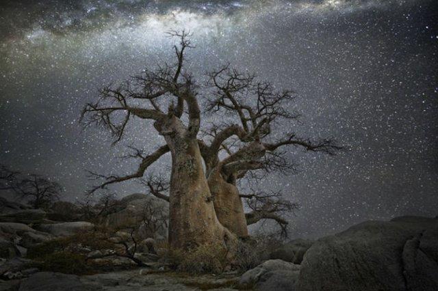 Nopti de diamant: Cei mai frumosi arbori seculari, in padurile stelare - Poza 7