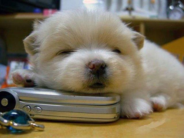 13 Animale care dorm in cele mai trasnite pozitii - Poza 10